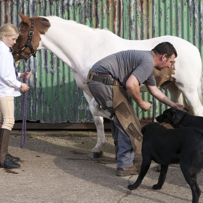 brills farm dogs & horses bed and breakfast lincoln newark nottinghamshire lincolnshire